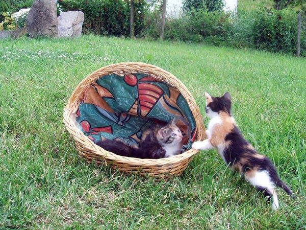 katzenbilder junge katzen spielen im garten. Black Bedroom Furniture Sets. Home Design Ideas